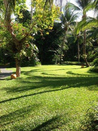 Anantara Bophut Koh Samui Resort : Lawn