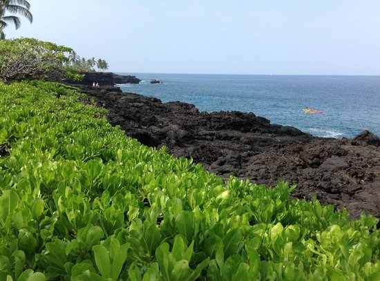 Sheraton Kona Resort & Spa at Keauhou Bay : coastline and kayaks