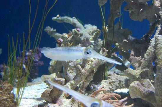Monterey Bay Aquarium: skittlefish