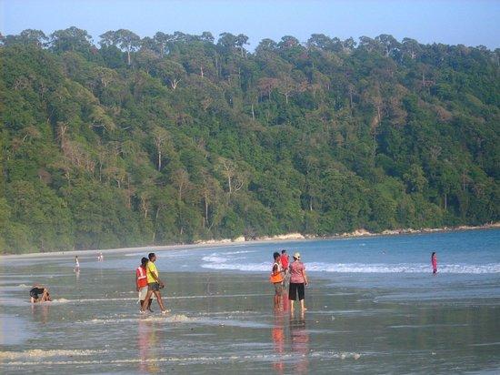 Radhanagar Beach: Forest beside the beach