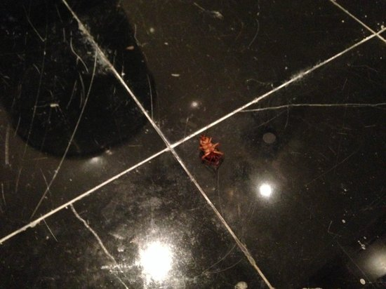 Radisson Blu Cebu : COCKROACH in BATHROOM