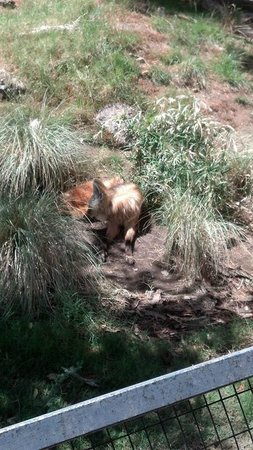 Phoenix Zoo: Hairy but cute.
