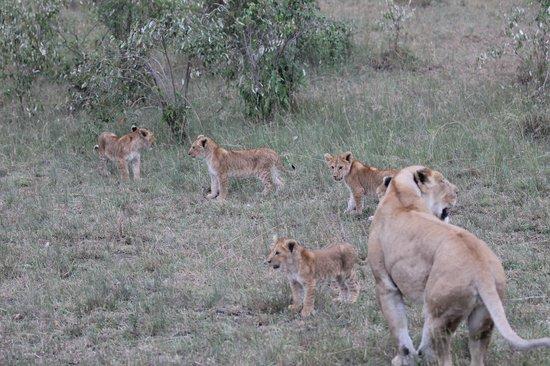 Mara Leisure Camp: On Safari