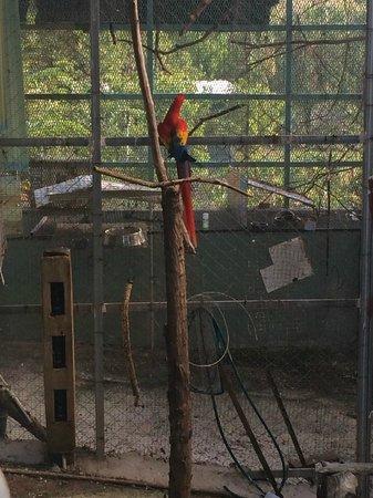 The Fajardo Inn: parrots