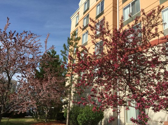 Hilton Garden Inn Denver Airport: Spring blossoms outside the hotel- so pretty!