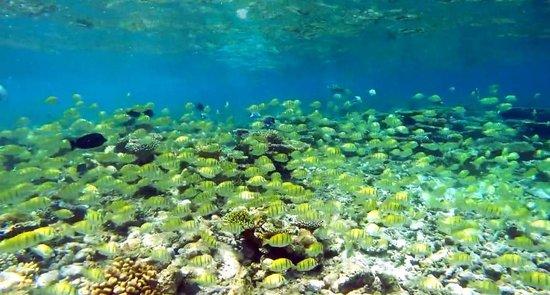 Cocoa Island by COMO: snorkelling trip