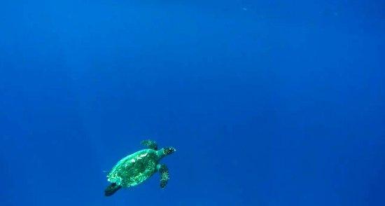 Cocoa Island by COMO : snorkelling trip - turtles!
