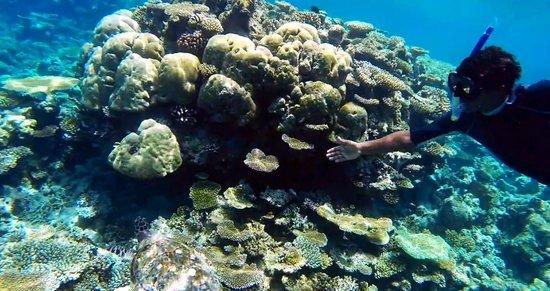 Cocoa Island by COMO: snorkelling trip - turtles!