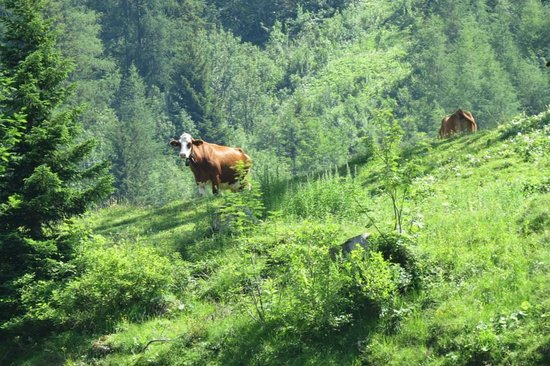 Hotel Bernerhof Gstaad: Gstaad Cow
