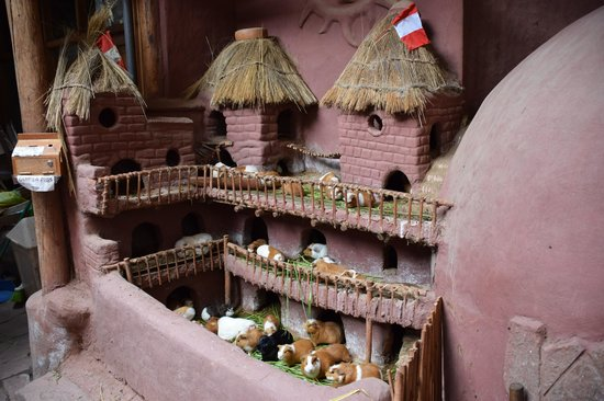 Pisac: Pick your guinea pig for cooking