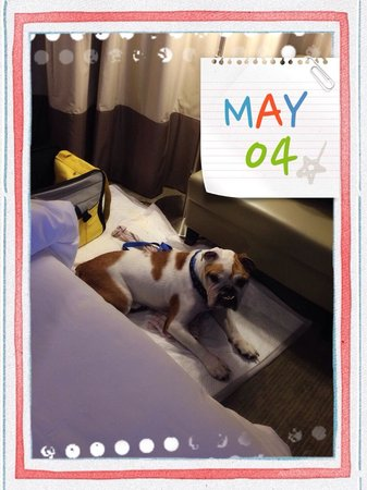 Hotel Panorama by Rhombus : My happy dog