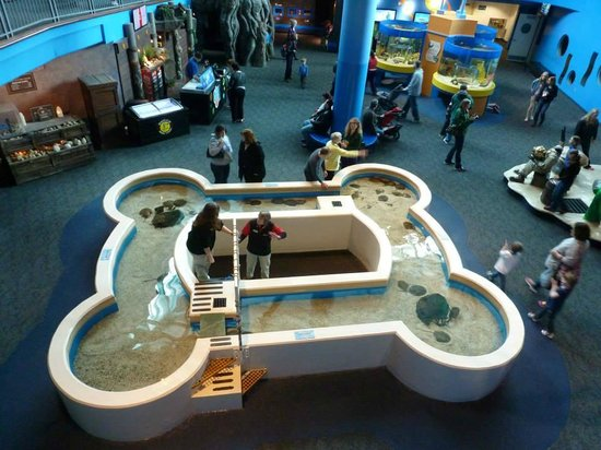 Ripley's Aquarium of the Smokies: view from above at the horseshoe crabs