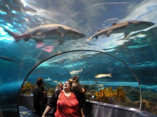 Ripley's Aquarium of the Smokies: AHH! Sharks!!!