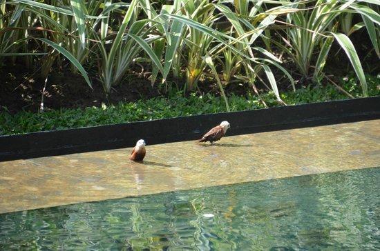 Villa Komea : Not so private pool :)