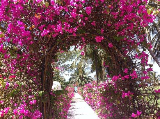 Royam Hotel: jardin très fleuri