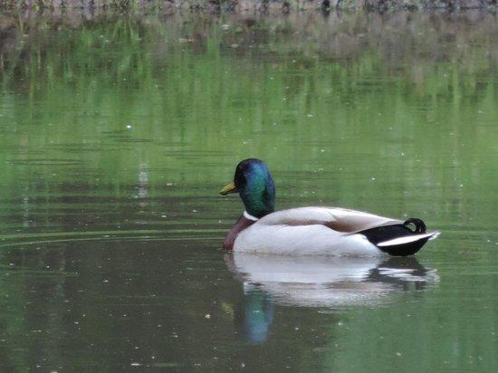 Orée du Bois en Sologne : Sur le petit étang c'est la période des amours des canrads...