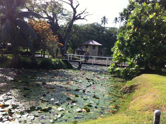 Koro Sun Resort and Rainforest Spa: laghetto con ninfee