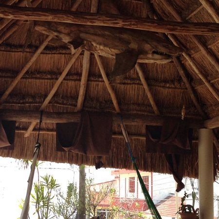 La Vida Dulce Casitas: Shark in palapa!