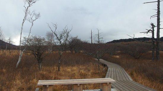 Senjogahara Field: november 3