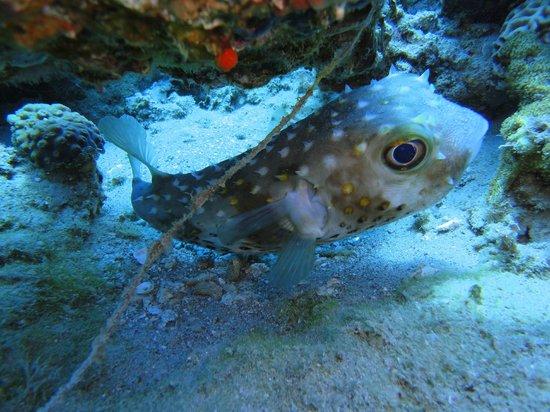 "Ahlan Aqaba Scuba Diving Centre: ""No idea what this one is"" fish"