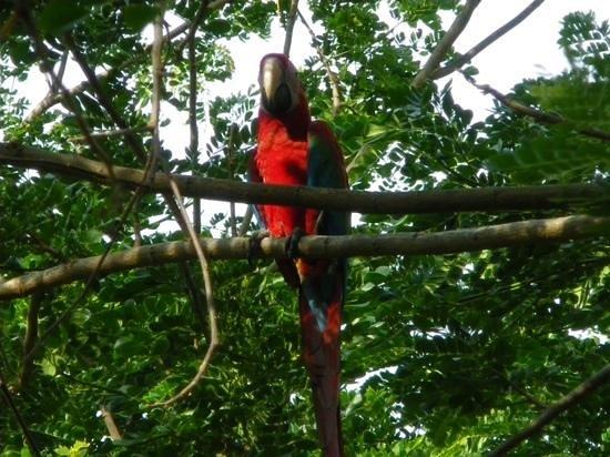 Shangri-La's Rasa Ria Resort & Spa: Garden wildlife