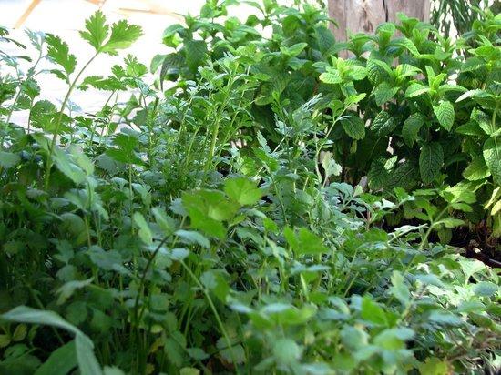 Cosmos Grand Hostal Ibiza: Our Herbs Garden