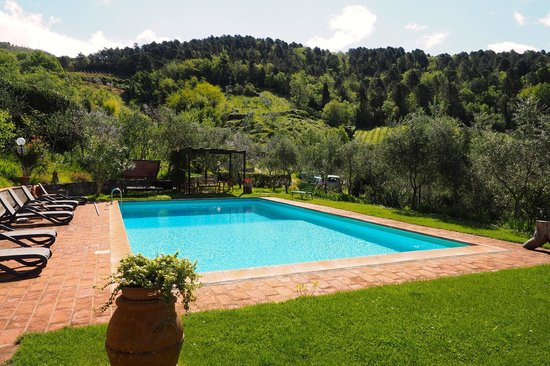 Poggio all'Olmo: Pool area: plenty of chairs; ample options of sun/shade (+ view of vineyards)