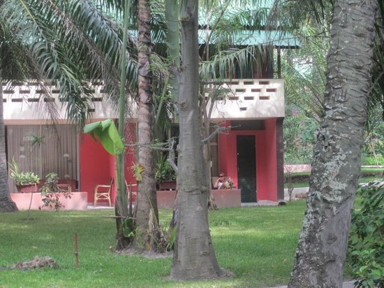Senegambia Beach Hotel: Hotel grounds... monkeys in the trees