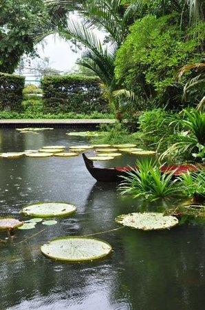 Tropical Spice Garden: pool at spice garden