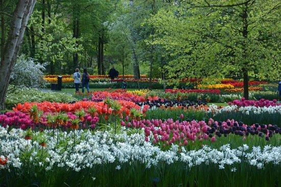 The Albus: Keukenhof Gardens