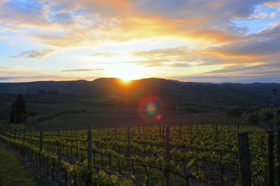 Poggio all'Olmo: Sunset view from the grounds