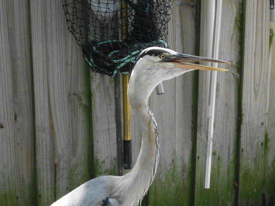 Peace River Wildlife Center: Just strolling around