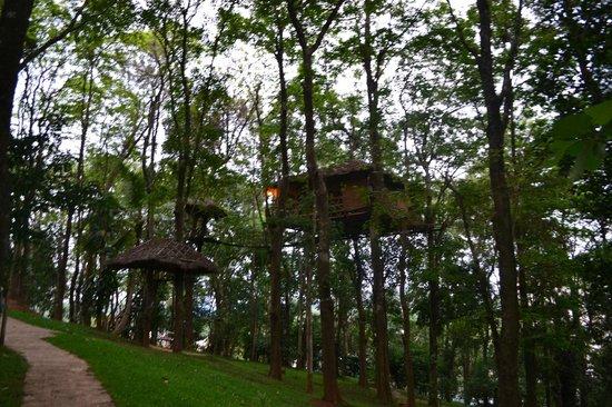 Greenwoods Resort: treetop coffee shop