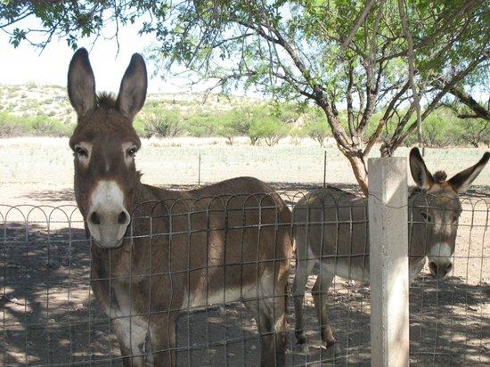 Cross Creek Cottages: Sweet Donkeys