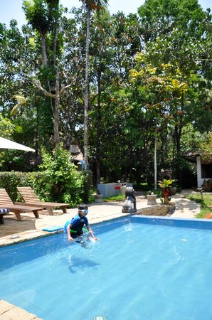 Shalimar Spice Garden - An Amritara Private Hideaway: Pool in midst of really large trees