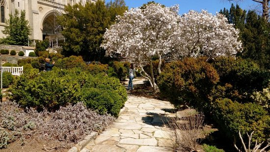 Washington National Cathedral : enchanting garden we were here in early april