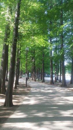 Saitama, Japan: メタセコイヤに囲まれたジョギングコースが気持ちいいんです。