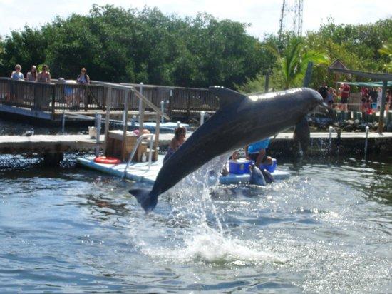 Dolphin Research Center : Einmalig