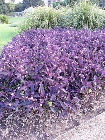 Royal Botanic Gardens : Abundant flora