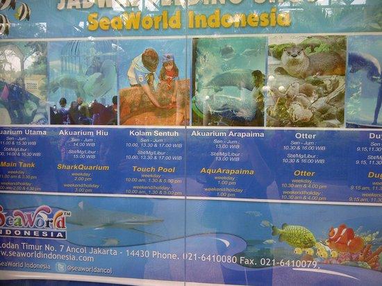 Sea World : jadwal feeding shwo