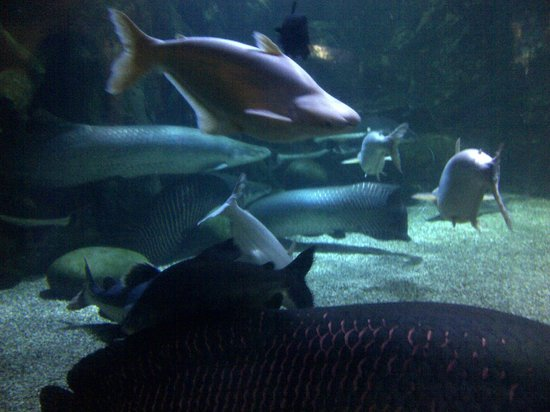 Sea World : koleksi