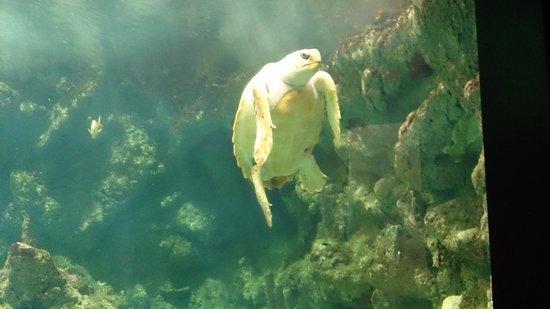 Océanopolis : tortue au papillon tropical