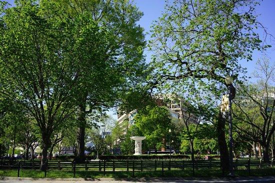 The Dupont Circle: 新緑が美しいデュポンサークル