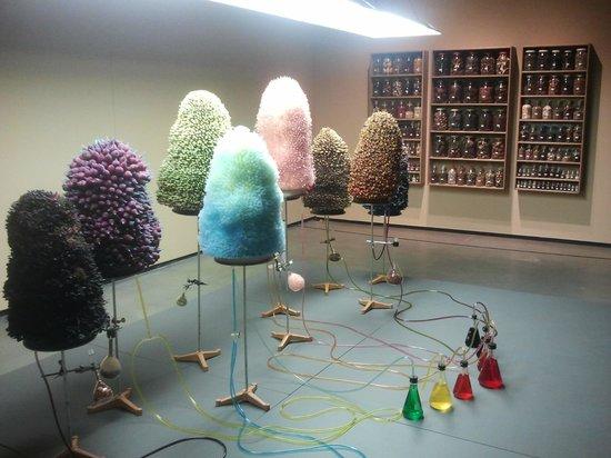 Art Gallery of Alberta : GMO exhibit