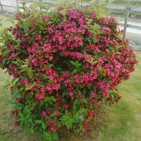 Hotel Le Chatellier : Superbe floraison en mai
