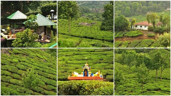 Munnar - Terrace Greens, A Sterling Holidays Resort: Views around the Resort