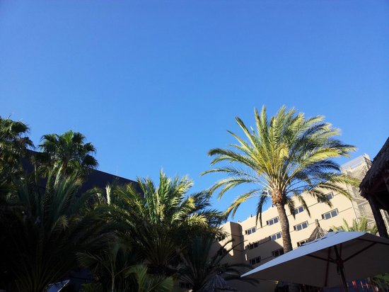 IFA Continental Hotel : View from the sunbeds