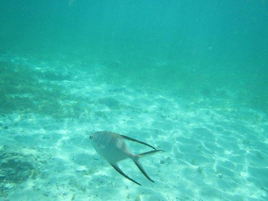 Tamarindo Beach: fish