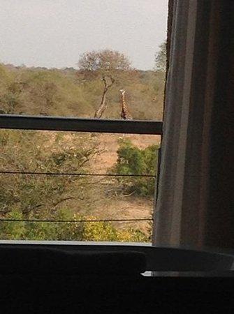 Kapama River Lodge: esta era a vista do meu quarto ... inesquecivel