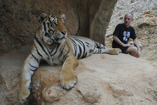 Tiger Temple ( Wat Pa luang Ta Bua) : Tiger temple